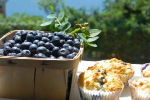 blog blue muffins