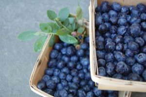 blog blueberries