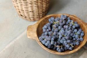 blog grapes