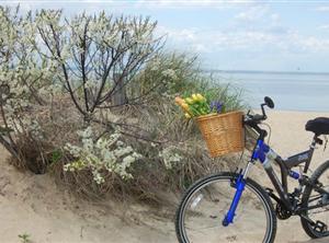 maryann bike