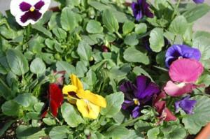 blog spring planter