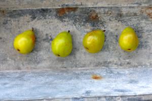 blog pear soda1